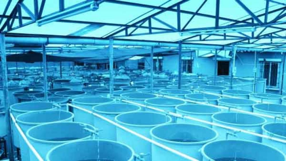 اهمیت کیفیت آب در صنعت آبزی پروری